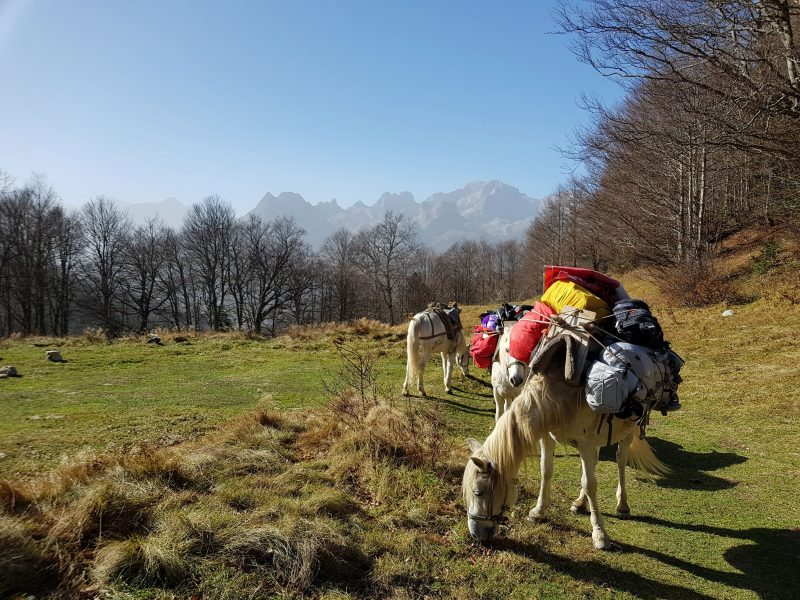 horses hiking tour